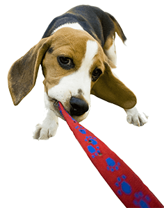 Pet Sitters for Dogs